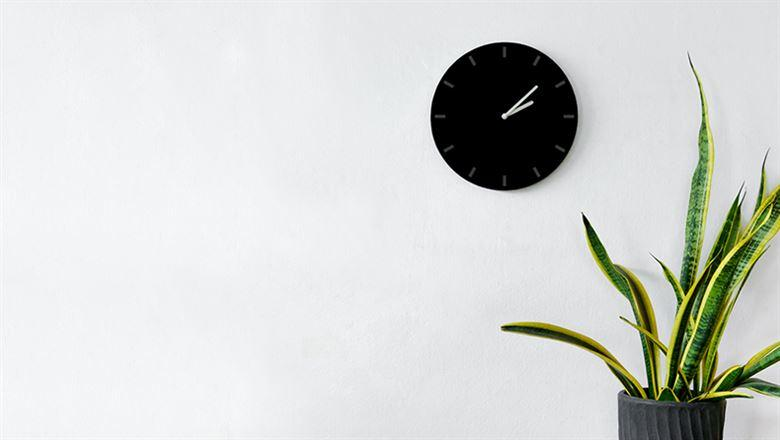 a wall clock and large plant